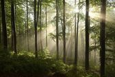Spring deciduous forest in the morning