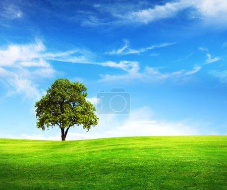 Photo pour Champ, arbre et ciel bleu - image libre de droit