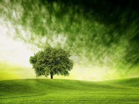 Photo pour Trouvez le temps pour le temps vert - image libre de droit
