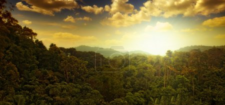 Panoramic view of nice tropical sunset over jungle...