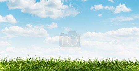Photo pour Herbe verte - image libre de droit