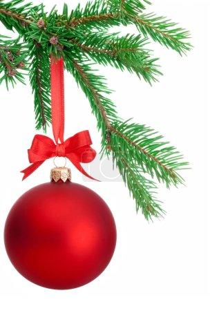 Photo pour Boule de Noël suspendu à une branche de sapin isolé sur fond blanc - image libre de droit