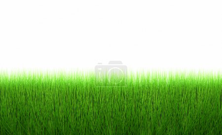 fresh green grass line isolated on white