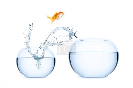 Photo for Goldfish jumping into a new aquarium. Concept of relocation. - Royalty Free Image
