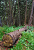 Cut off the tree in the forest