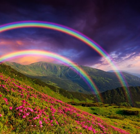 Photo for Mountain landscape with a rainbow over flowers - Royalty Free Image