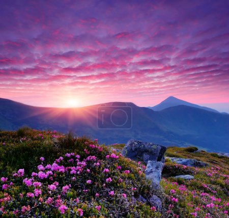 Photo for Evening landscape with pink flowers in the mountains and the setting sun - Royalty Free Image