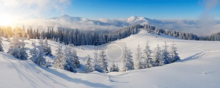 Photo for Winter panorama of mountains on a sunny day. Carpathians, Ukraine - Royalty Free Image