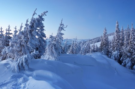 Twilight in the woods in winter