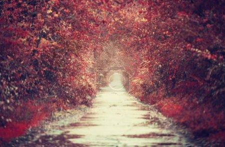 Autumn alley in Odessa, Ukraine