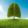 Tree with form of lungs, oxygen for the earth...