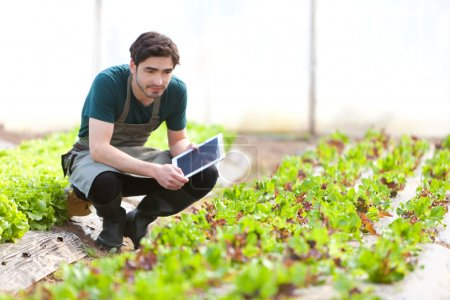 Young business farmer working on his tablet