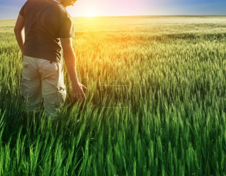 Photo for Man in wheat field and sunlight - Royalty Free Image