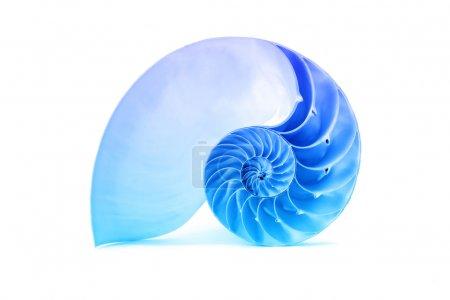 A perfect and amazing fibonacci pattern in a nauti...