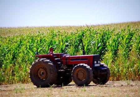 Antiguo tractor en maizal
