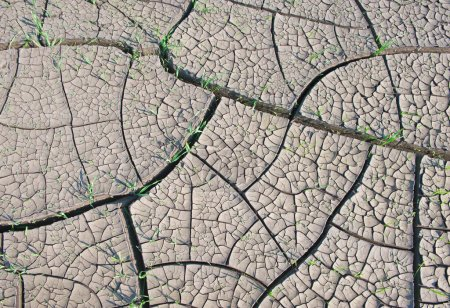 Cracked land with grass