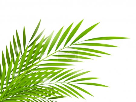 Illustration for Summer background with palm leaves - Royalty Free Image