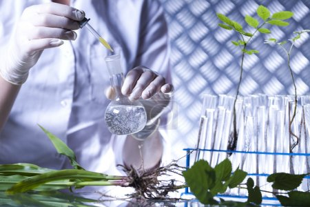 Plant in hands of the scientist