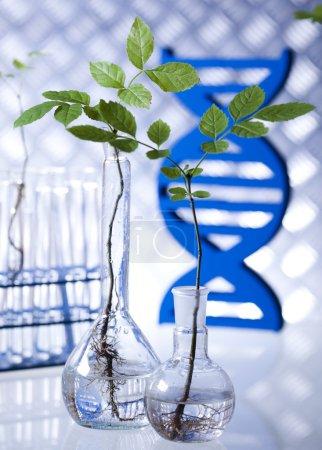 Photo pour Expérimenter la flore en laboratoire - image libre de droit