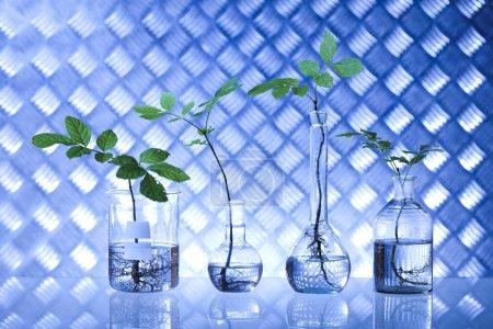 Plants in laboratory