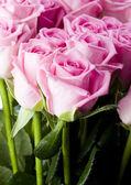 Krásné růže