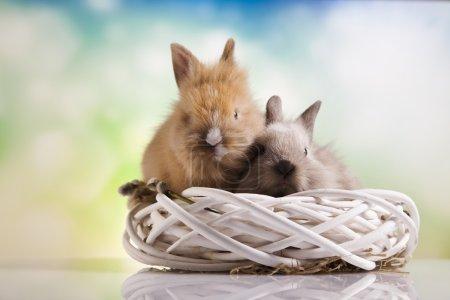 Easter bunnies in nest