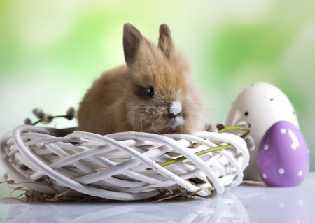 A rabbit and Easter eggs