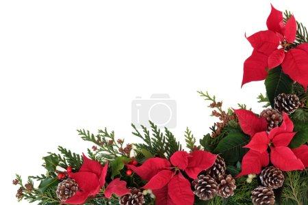 Poinsettia Flower Border