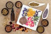 Magické a léčivé byliny