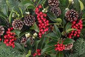 Holly berry krásy