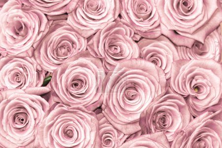 Photo for Pink natural roses background - Royalty Free Image
