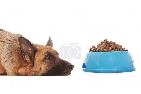 Conceptual photo of non hungry dog
