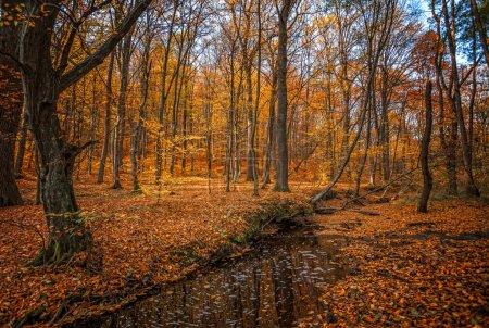 Photo pour Belle journée dans la brume d'automne fores avec ruisseau - image libre de droit