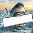 A shark holding a billboard in his mouth. Copyspac...