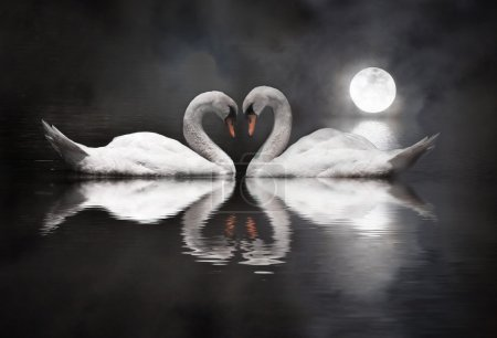Photo for Romantic swan during valentine's day - Royalty Free Image