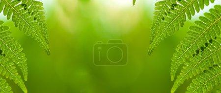 Photo pour Feuille de la nature avec fond vert déconcentré - image libre de droit