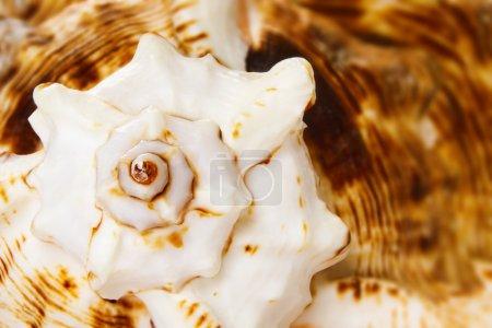 Marine sea shell closeup background