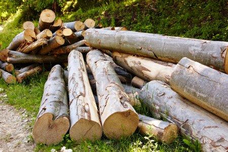 Photo pour Pile de grumes de hêtre à la campagne, image de déforestation - image libre de droit