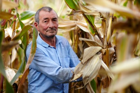 Farmer at corn harvest