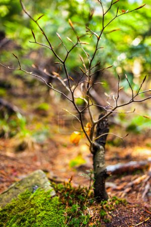 Baby beech tree with selective focus