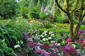 Colorful woodland garden