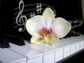 Piano keys with a flower and notes of, musical background.