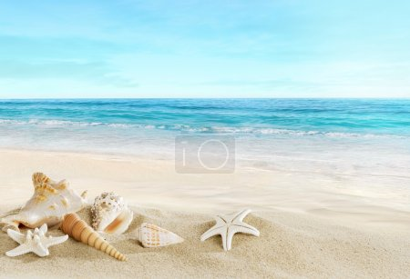 Landscape with shells on sandy beach...