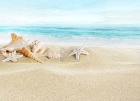Landscape with shells on tropical beach...