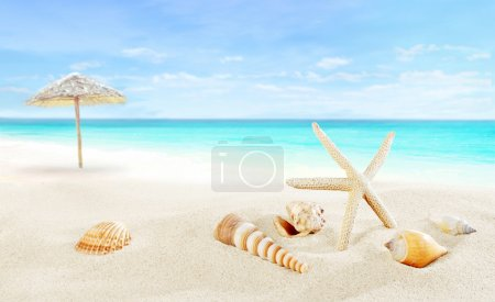 Photo for Landscape with shells on tropical resort - Royalty Free Image
