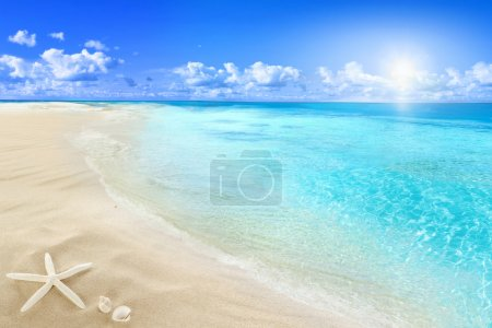 Photo for Landscape with shell on sunny beach. - Royalty Free Image