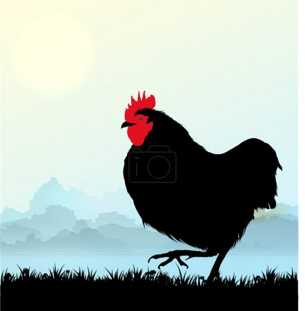 Illustration for Vector Cockerel silhouette on Morning sky - Royalty Free Image