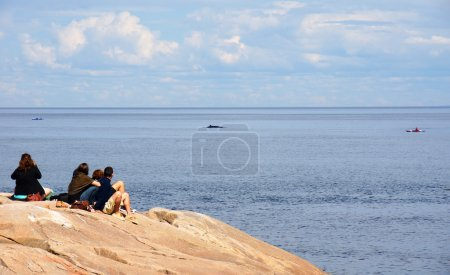 Whale watching from shore
