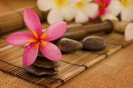 Photo pour Spa tropical aux fleurs de Frangipani. Faible éclairage, adapté au thème lié au spa . - image libre de droit