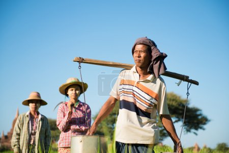Photo for Group of Traditional Asian farmers working in paddy field - Royalty Free Image